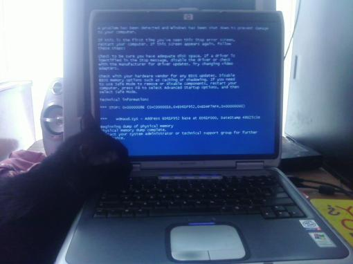 cat_and_BSOD